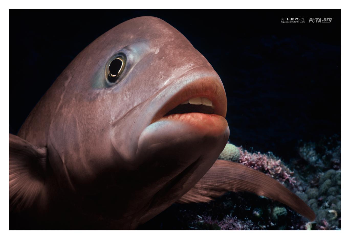 Губы картинки с рыбой